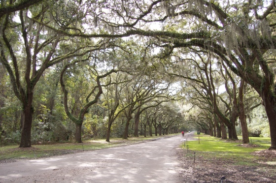Wormsloe Plantation, Savannah, GA